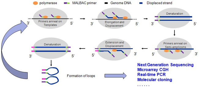 Mbioscience Single Cell Whole Genome Amplification Kit